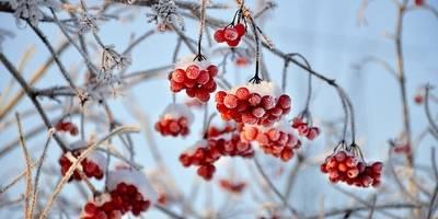 Χειμωνιάτικες ιώσεις